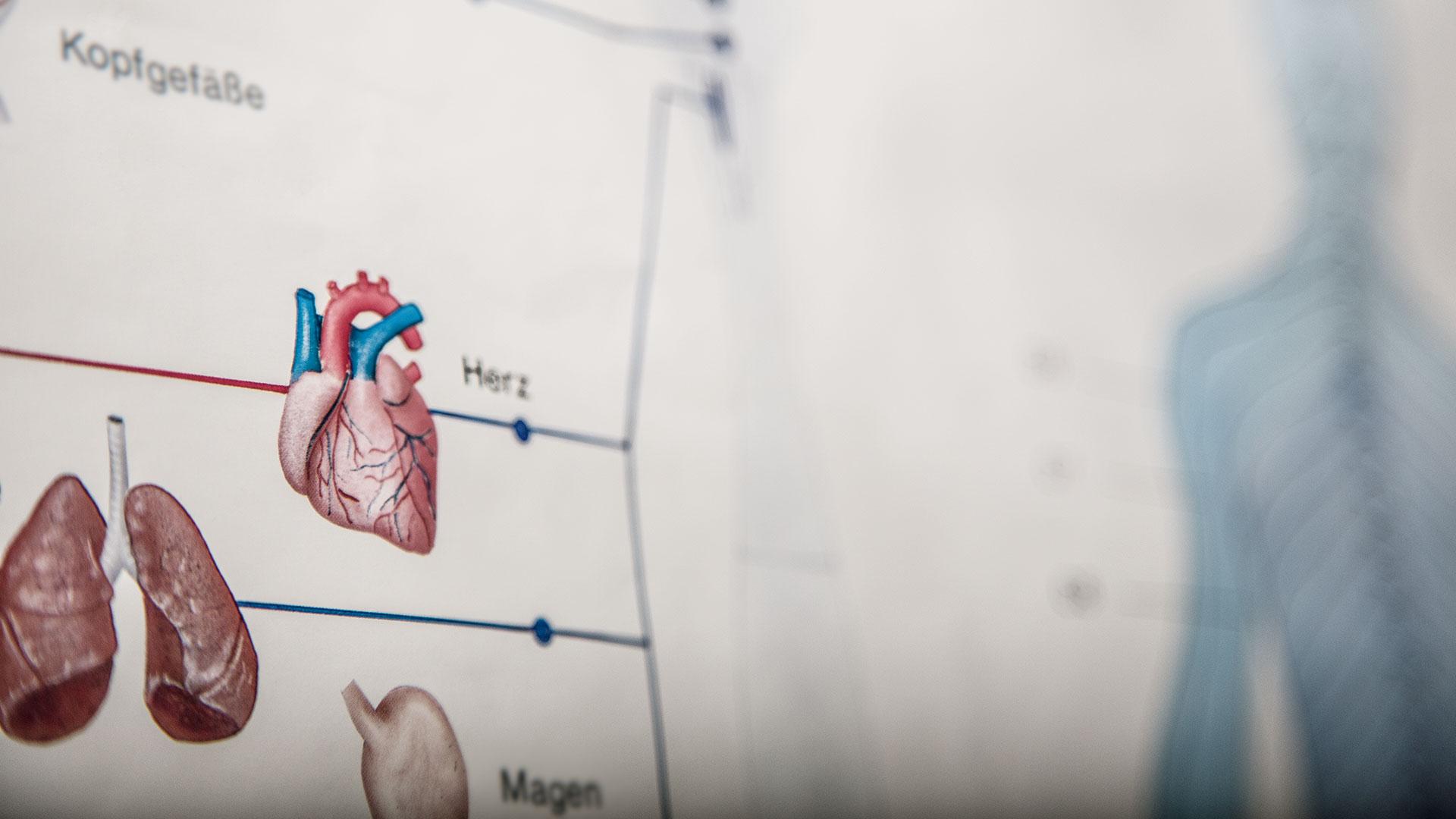 Anatomie | Schmitz